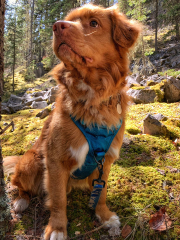 Kootenay All-Terrain Dog Harness