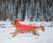 dog running in a snowy field surrounded by snow capped evergreen trees in the red rocky mountain dog jacket coat