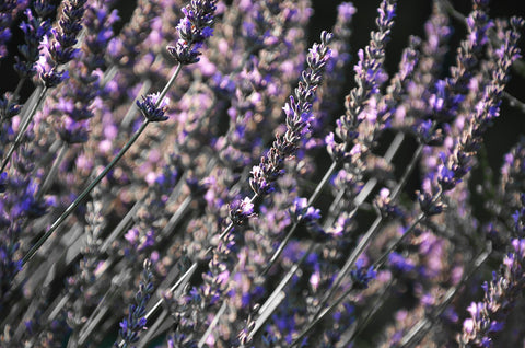 Lavender is great for helping you to relax
