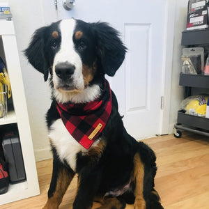 Dog Bandana - Buffalo Plaid Flannel