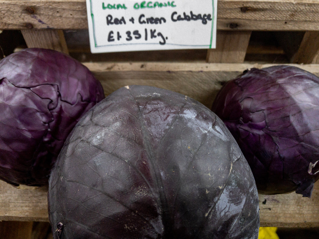 Local East Lothian Organic Red Cabbages East Linton, Scotland