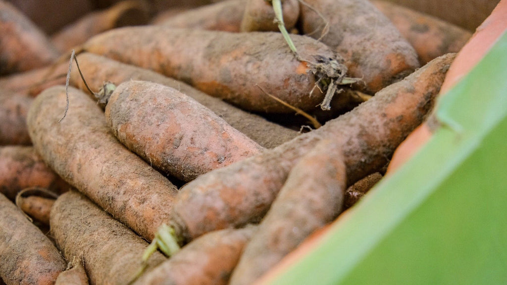 Organic Local Dirty Carrots from East Lothian Scotland