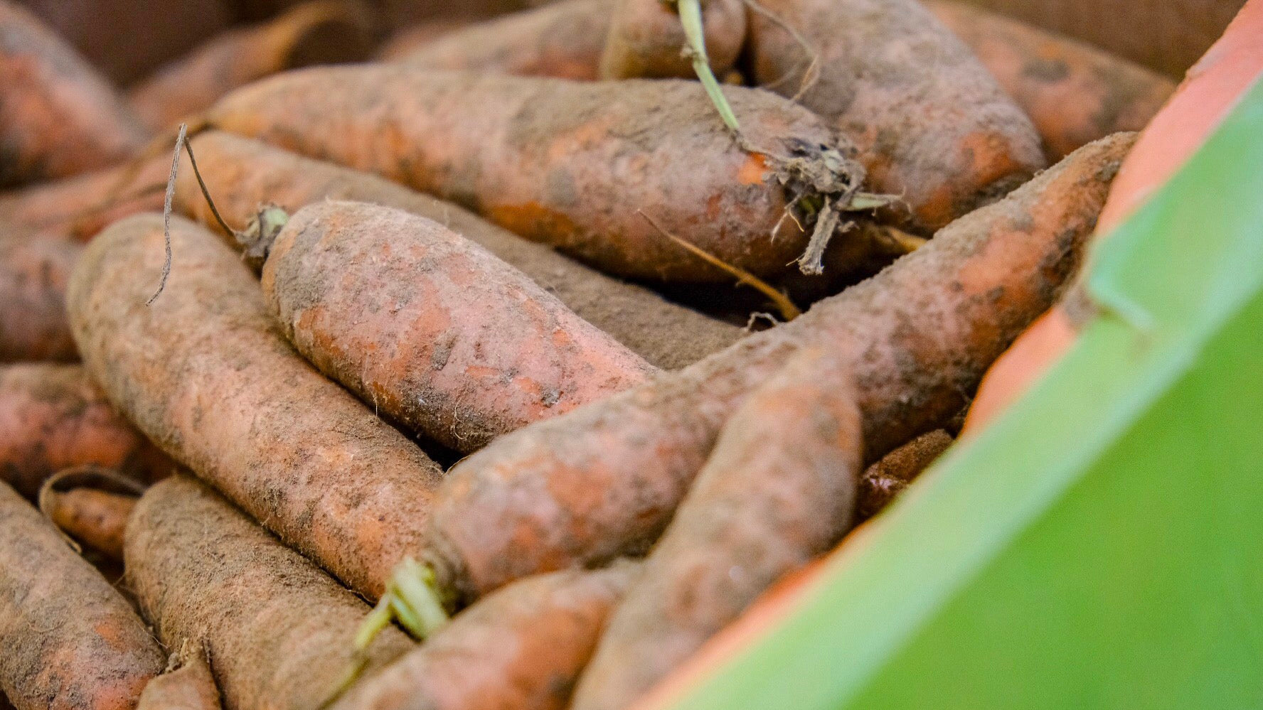 Organic Local Dirty Carrots from The Mart Farm Shop East Lothian Scotland