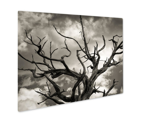 Metal Panel Print, Dead Tree - VegasheatX