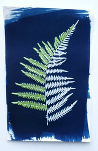 Botanical cyanotype series - Fern, in green and white