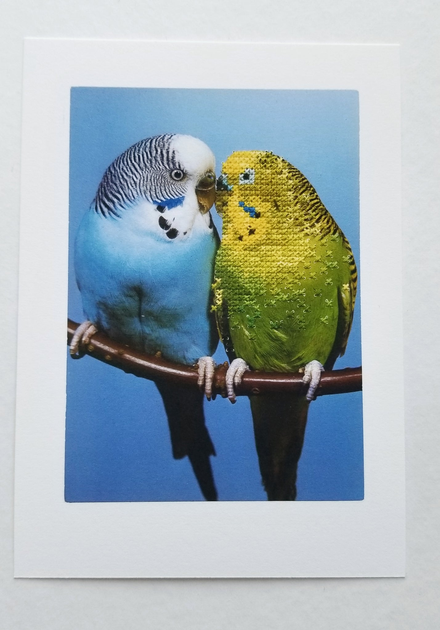 """Budgies"" - dual-sided art print, open edition"
