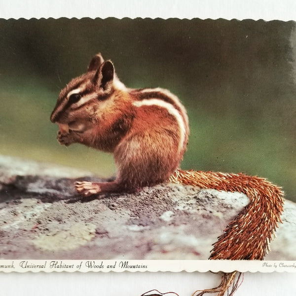 Chipmunk, Universal Inhabitant of Woods and Mountains