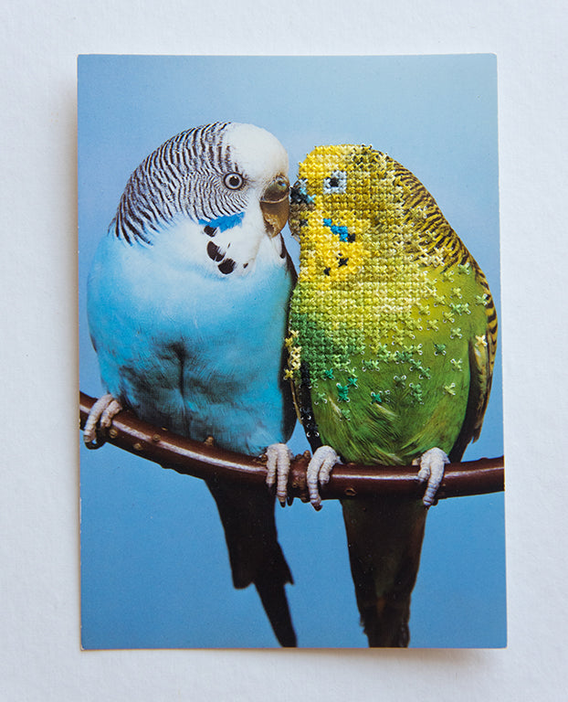 You look different than I had expected (Budgies)