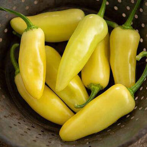 Calero Yellow Jalapeno
