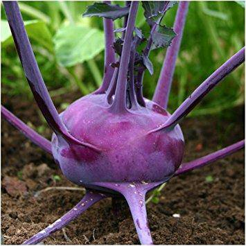 Purple Vienna Heirloom Kohlrabi