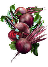 Ruby Queen Heirloom Beet