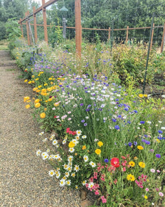 Cut Flower Seed Mix