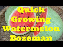 Bozeman Heirloom Watermelon