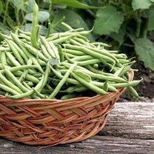Harvester Green Bean