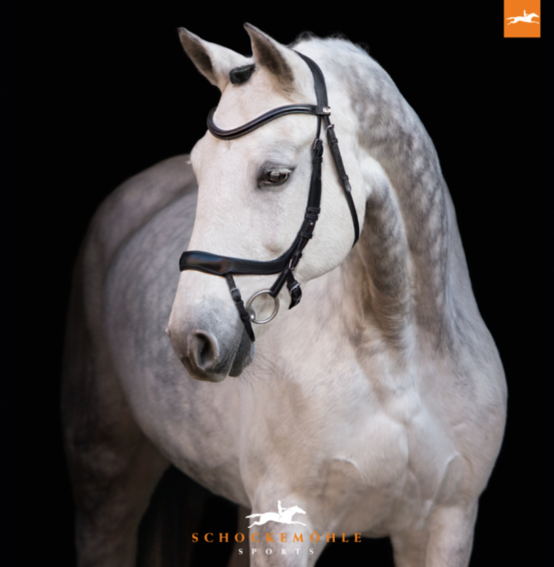Schockemohle Equitus Alpha Anatomical Bridle for dressage horseback riders. This is a great horseback riding bridle for competition and everyday horseback riding.