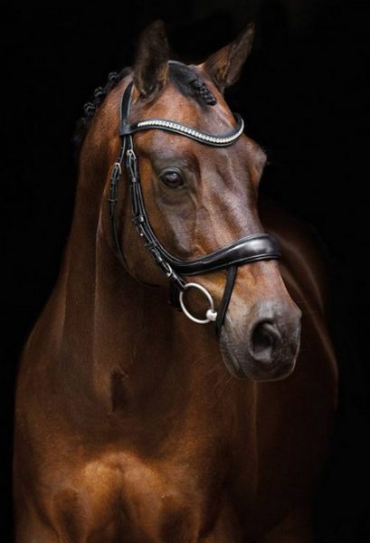 Schockemohle Equitus Beta Dressage Anatomical Bridle - Equestrian Fashion Outfitters