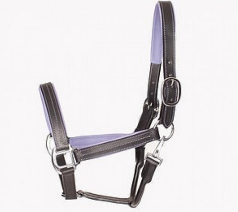 Leather Halter with Colour Accents - Equestrian Fashion Outfitters