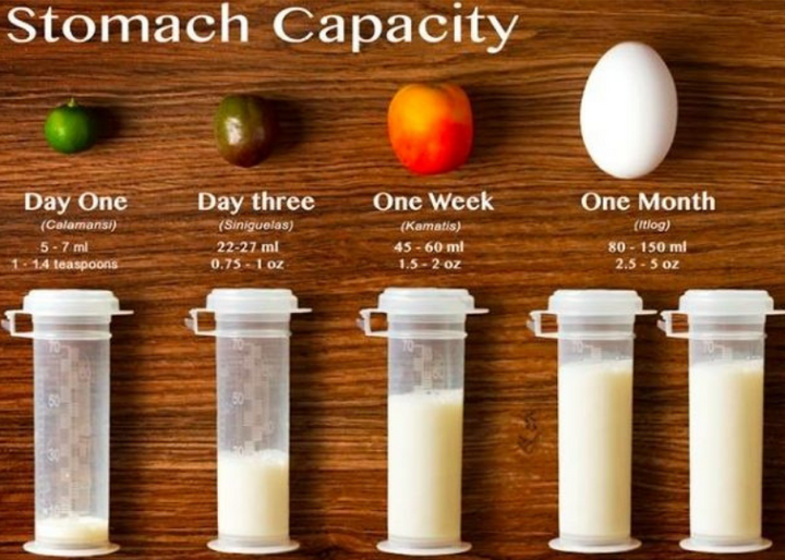 How Much Milk does Baby Need? – Newborn Stomach Capacity by Age