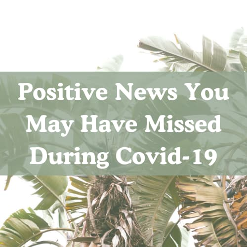 Positive News You May Have Missed During Covid-19