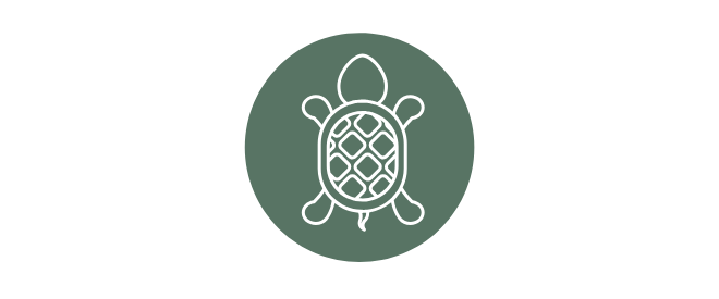 green and white icon of a turtle