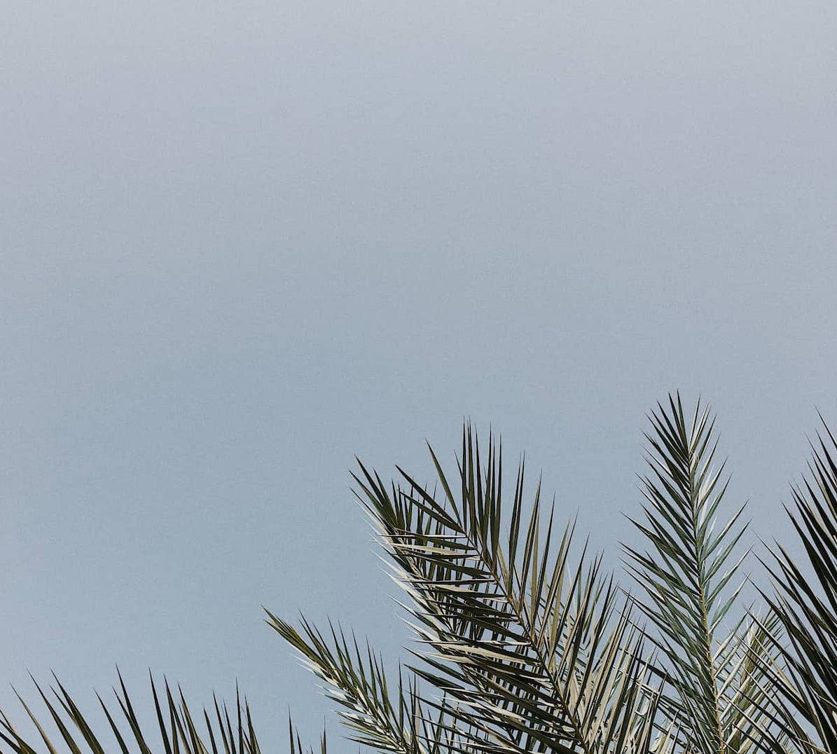 image of palm leaves and blue skies
