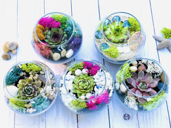 succulent terrarium kit, best gifts for teen girls, gift ideas for tween girl, gifts for tween girl, christmas gift ideas for teenage girls, teenage girl birthday gift ideas