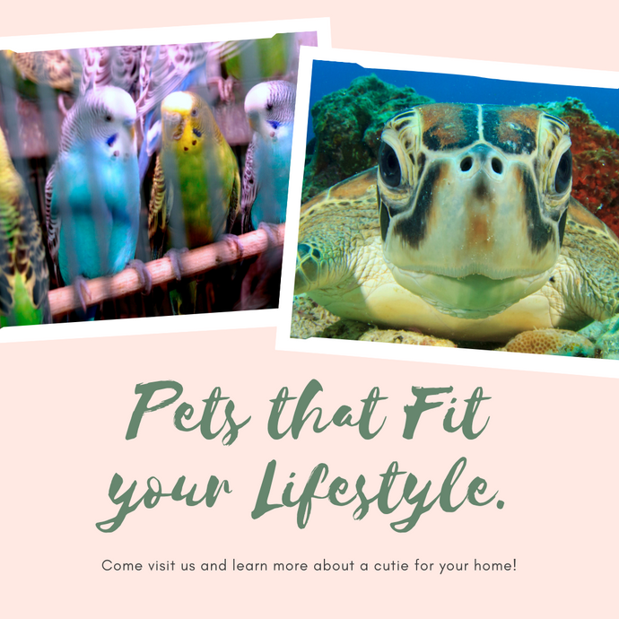 Pets that Fit your Lifestyle!