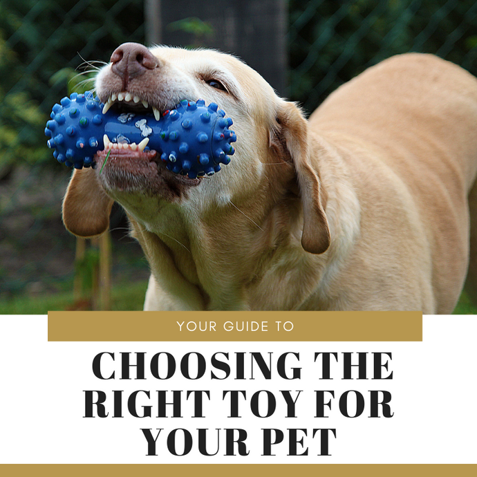 Here's Your Guide to Choosing the Right Toy for Your Pet!