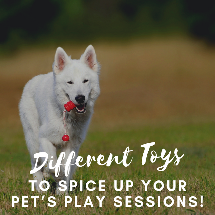 DIFFERENT TOYS TO SPICE UP YOUR PET'S PLAY SESSIONS