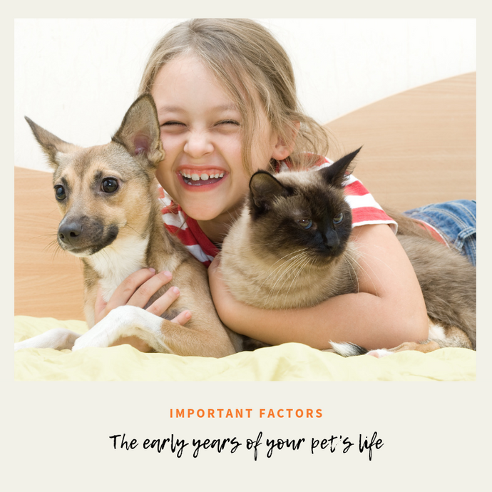 Early Years Of Your Pet's Life: Here are Some Important Factors You May Not Have Considered!