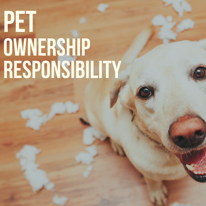 A Pet Owner's Guide: Knowing Your Responsibilities of Pet Ownership