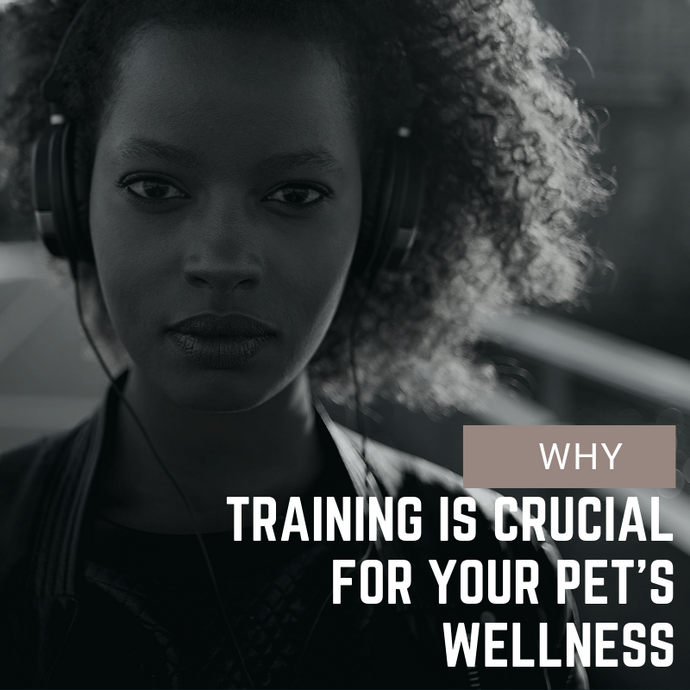 Why Training is Crucial for Your Pet's Wellness