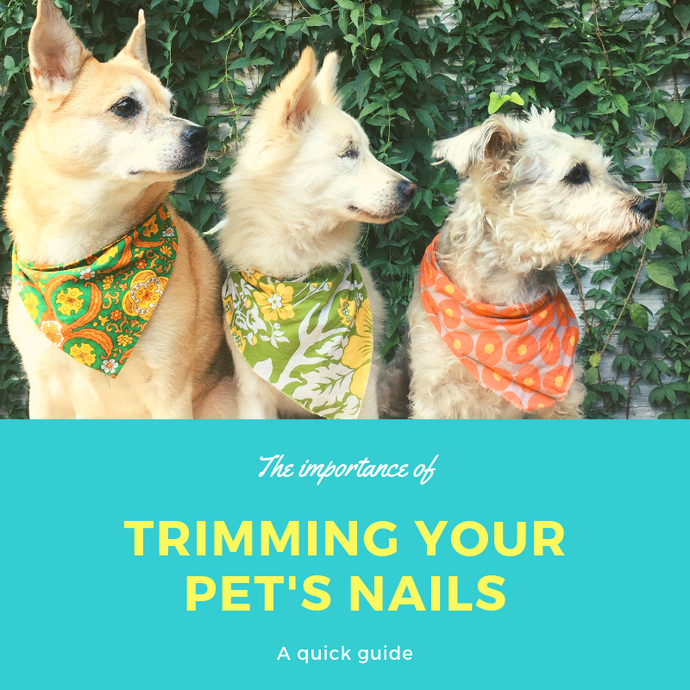 CUTTING YOUR DOG'S NAILS: WHEN, WHY, AND HOW OFTEN?