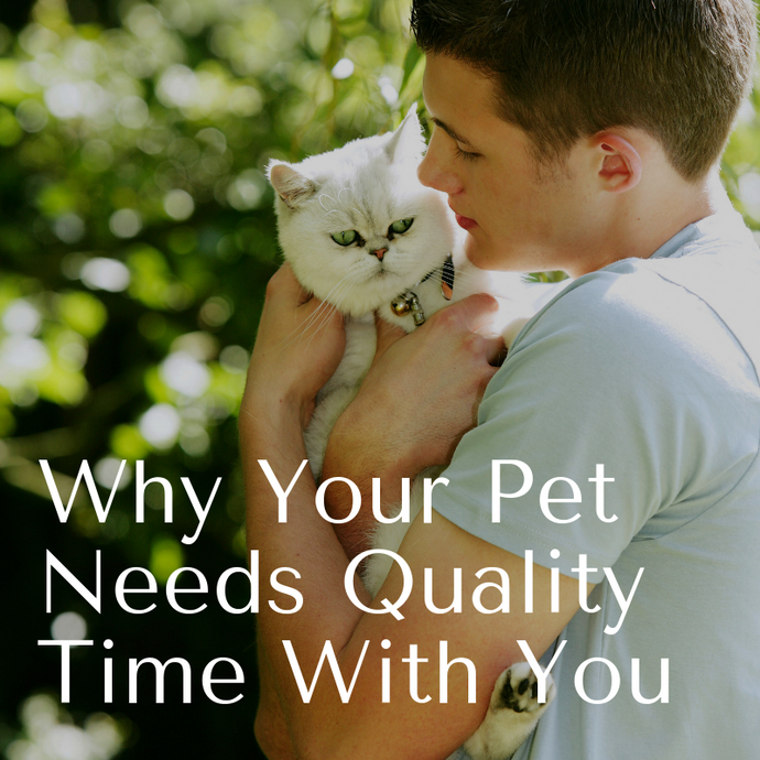 WHY YOUR PET NEEDS QUALITY TIME WITH YOU.