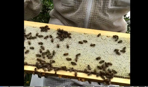 Having the bare essentials to harvest your honey - Aug 2019