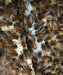 Getting our first Honey Bee package - New Beekeepers part 1 -April 23, 2019