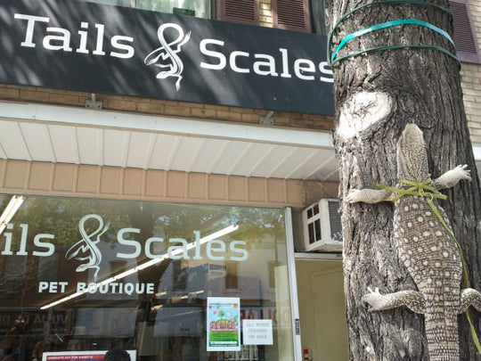 Tails and Scales Storefront