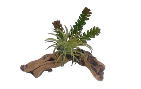 Habi-Scape Succulent on Driftwood