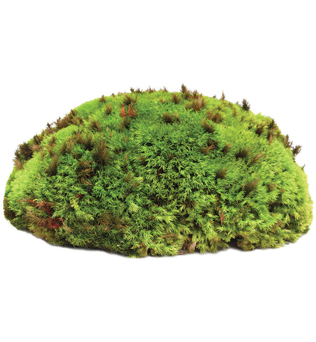 Royal Pillow Moss