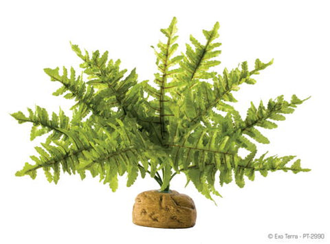 Exo Terra Rainforest Plant - Boston Fern