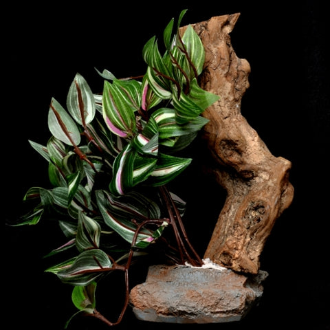 Habi-Scape Tropical Plant on Stone Base with Worn Wood