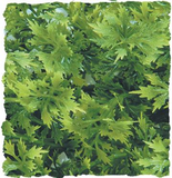 Zoo Med Natural Bush Plants - Australian Maple