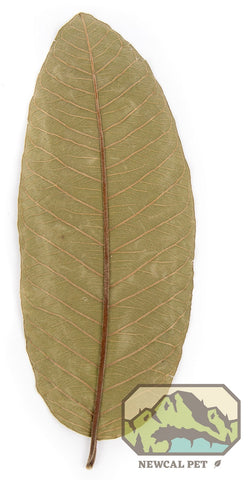 Guava Leaves (10 Pack)
