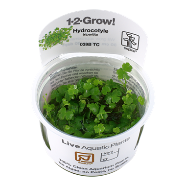 Tropica Hydrocotyle tripartita 1-2-Grow