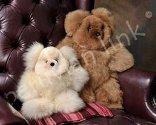 Teddy Bears 5.5in