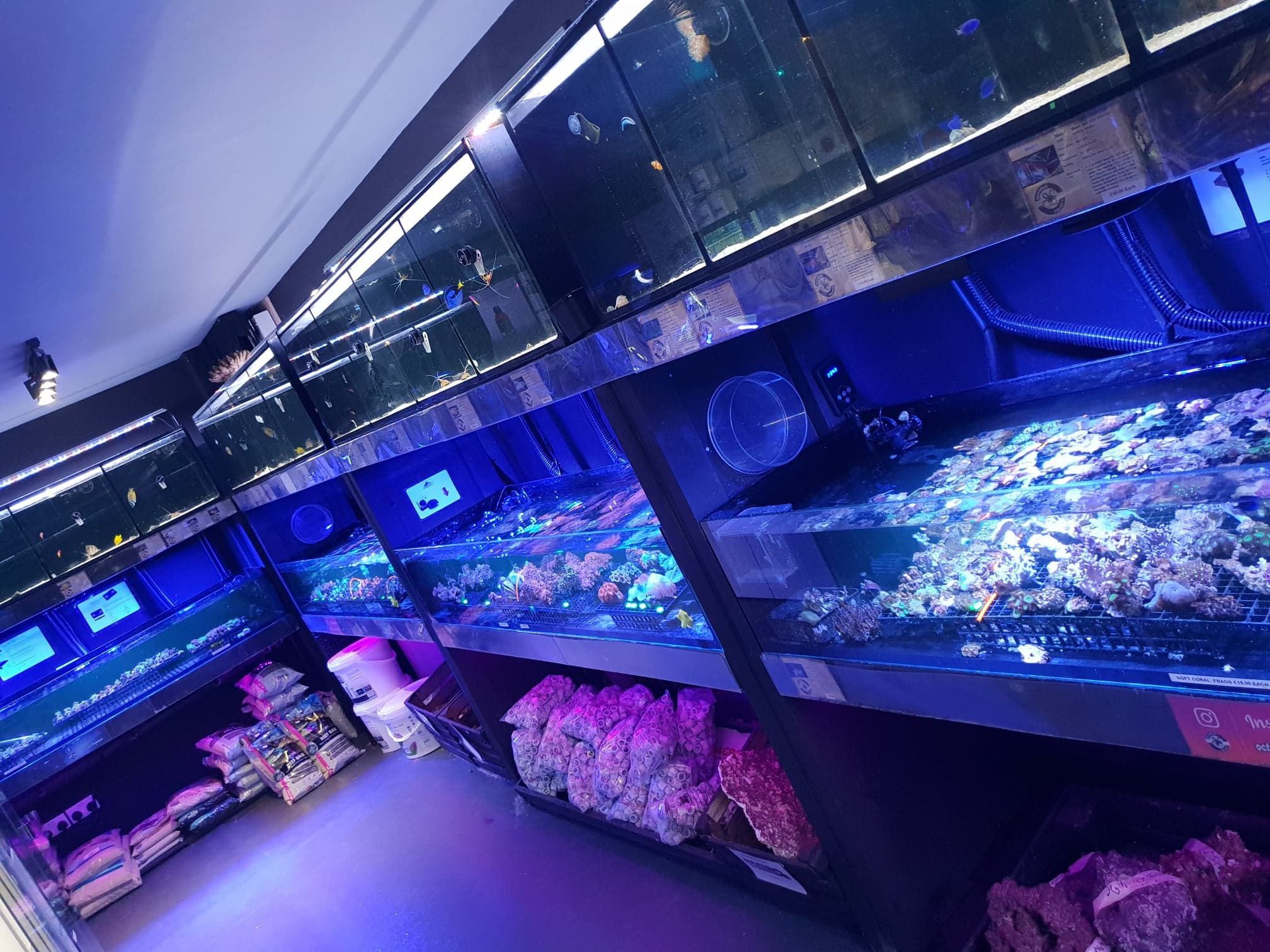 Marine fish corals aquariums Hull