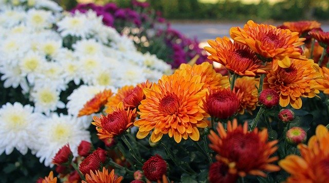 Mums Flower Pots (Large)
