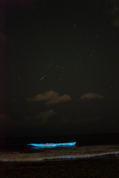 bioluminescent beach with constellation orion pyorfarms