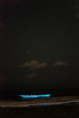 bioluminescent beach and stars Orien