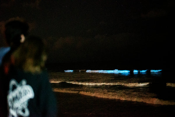 bioluminescent beach san diego pyrofarms